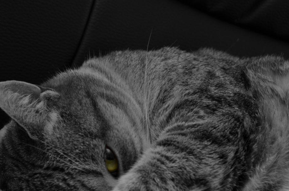 Shaila 2 Katze Schwarzweiß Colorkey Grün Augen Nahaufnahme