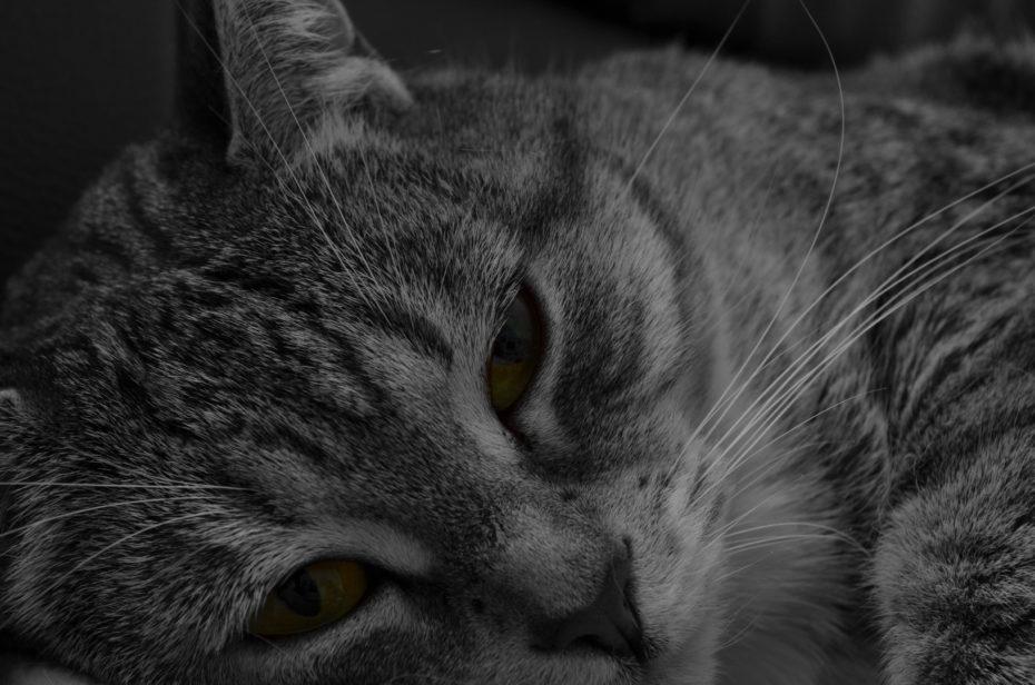 Shaila 3 Katze Schwarzweiß Colorkey Grün Augen Nahaufnahme