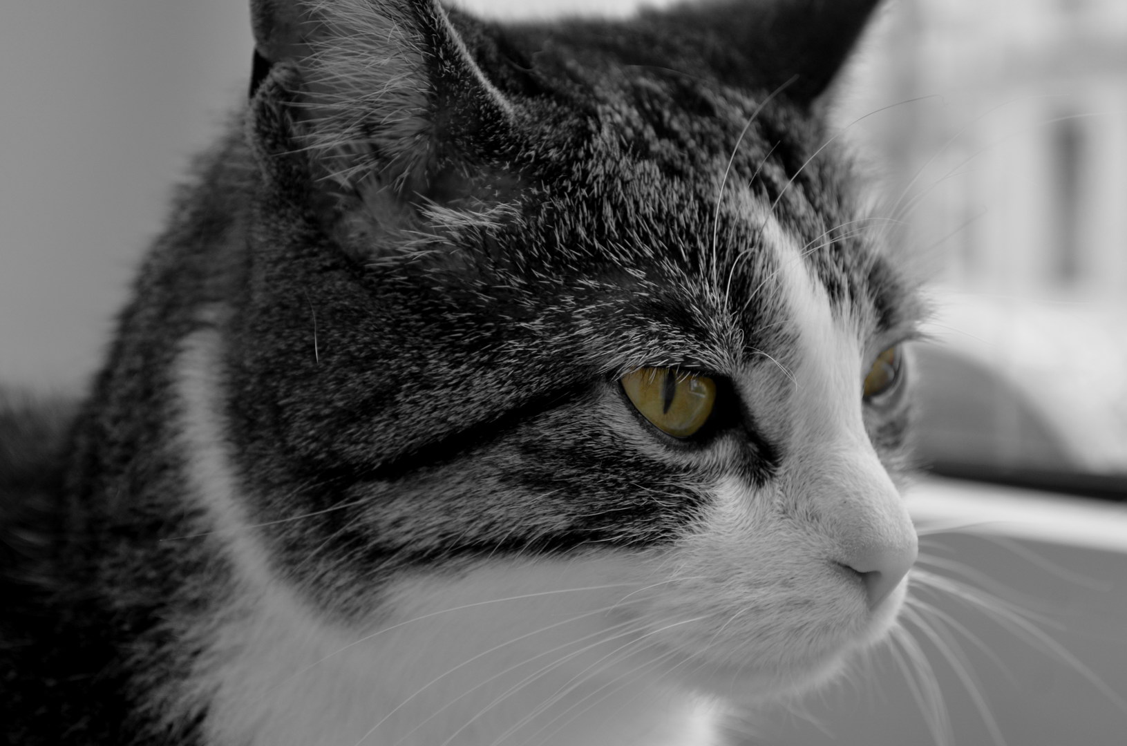 Tasha Katze Schwarzweiß Colorkey Grün Augen Nahaufnahme