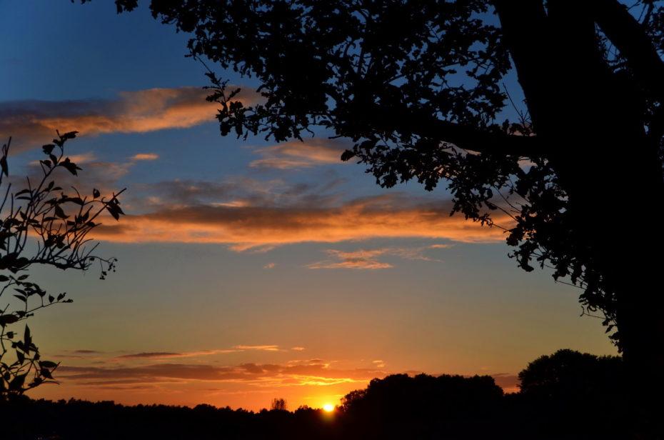 Sonnenuntergang Landschaft Baum Äste Strauch Silhouette Wolken Sonne Gold Himmel