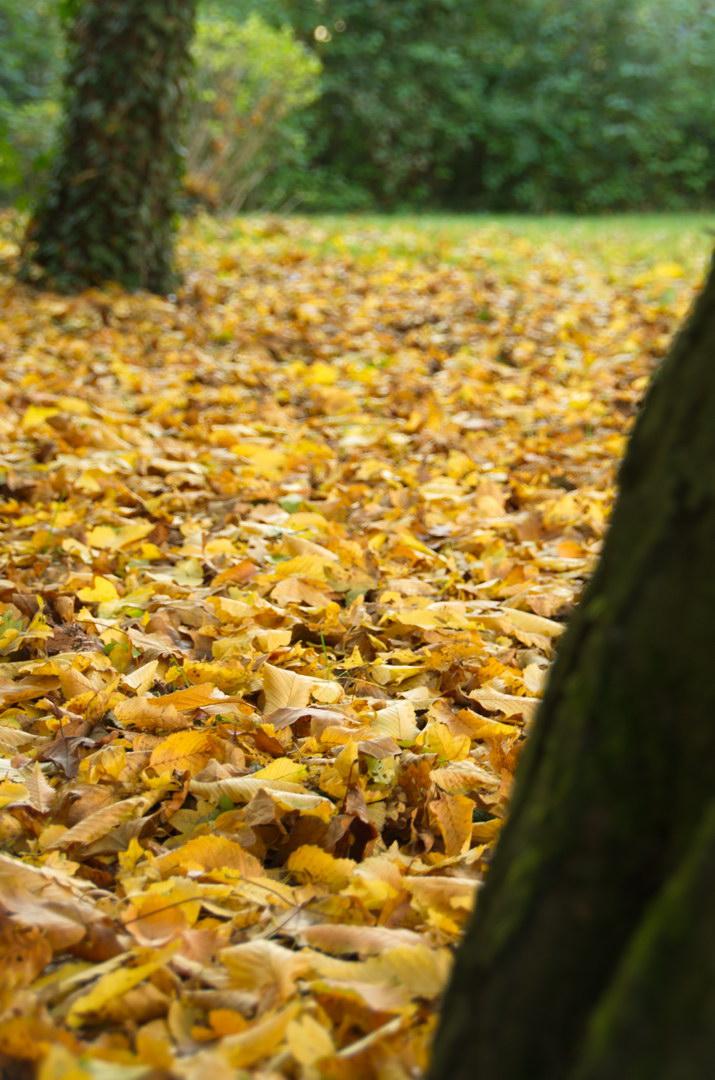Herbst Laub Gold Wiese Efeu Hecke
