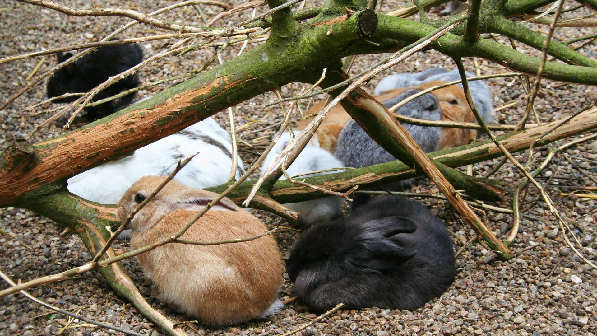Viele Kaninchen braun weiß schwarz zwischen Ästen Kies