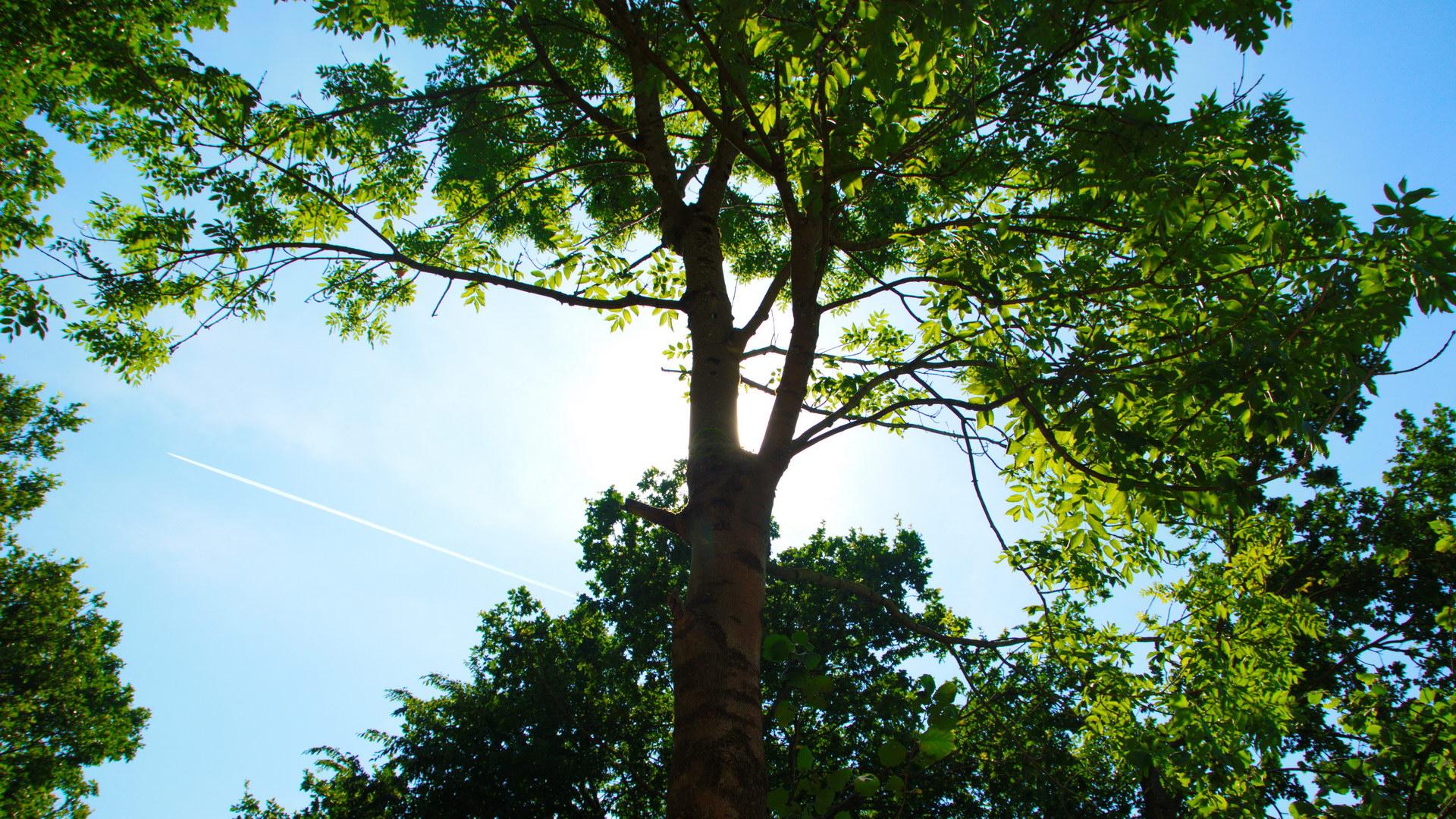 Sonne hinter Baum Grün leuchtende Blätter Blauer Himmel