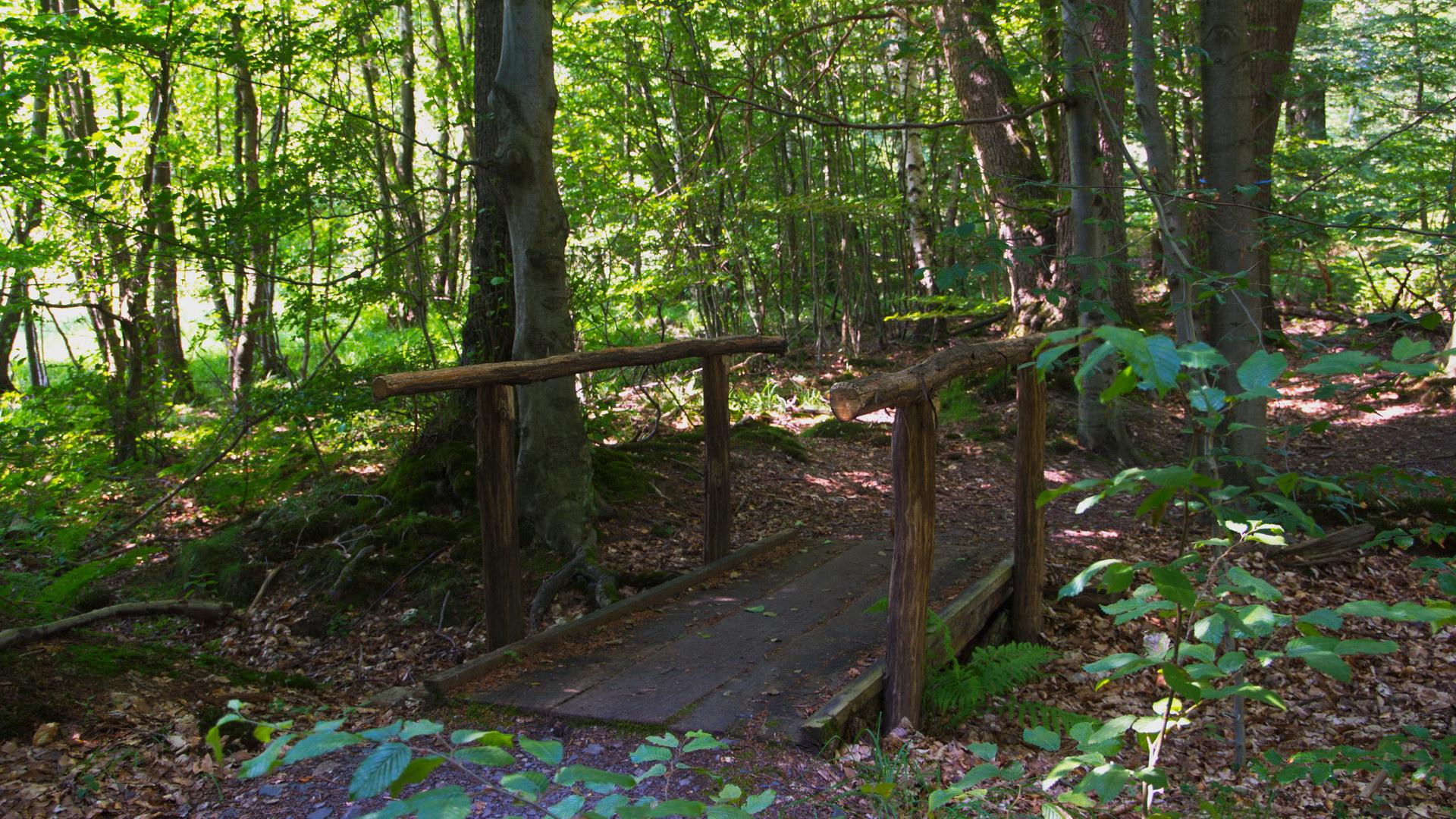 Kleine Holzbrücke im Wald Alt Sonne grün Bäume Sträucher Blätter Moos