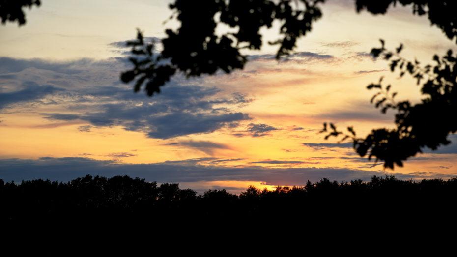 Sonnenuntergang im Wald Gold Äste am Rand Bäume unten